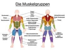 Corps masculin des textes allemands de diagramme de muscle illustration de vecteur