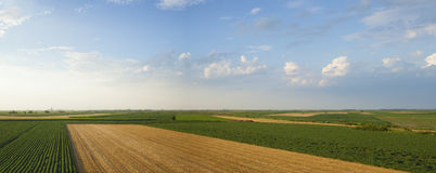Corps Panorama. Summer crops panorama with soybean, wheat and corn fields Royalty Free Stock Images