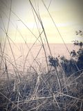 Corpus Christi. Faded old time photo filtered treated black and white gray wash grass oceanfront Stock Image