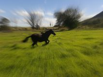 Corra como o vento Flicka Imagem de Stock Royalty Free