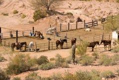 Corral del cavallo immagini stock