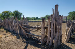 Corral o recinto de madera tradicional para el ganado de la gente de la tribu de Himba Foto de archivo