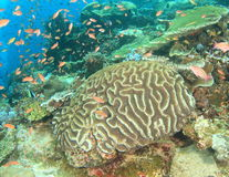 Corral reef Royalty Free Stock Photos