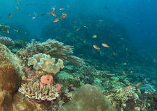 Corral reef Royalty Free Stock Images