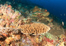 Corral reef stock photography