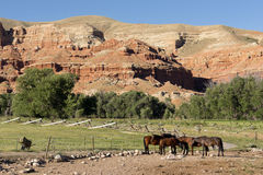 Corraled Horses Wyoming Badlands Ranch Livestock Animals Royalty Free Stock Photo