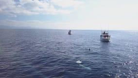 Corralejo, Κανάρια νησιά Ισπανία  Στις 13 Ιουνίου 2018: η ομάδα δελφινιών κολυμπά κοντά σε μια βάρκα τουριστών απόθεμα βίντεο