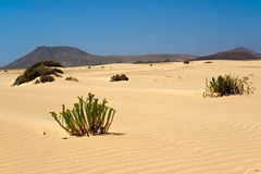 Corralejo Desert in Fuerteventura. Canary Islands,Spain Royalty Free Stock Photography