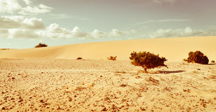 Life against desert. Small plants on the sea of sands. Royalty Free Stock Photography