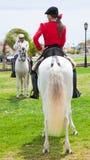 CORRALEJO, ESPAÑA - 28 DE ABRIL: Demostración del caballo Fotos de archivo