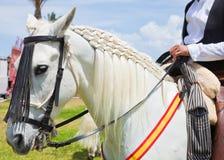 CORRALEJO, ESPAÑA - 28 DE ABRIL: Demostración del caballo Imagen de archivo libre de regalías