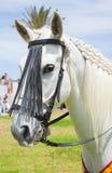 CORRALEJO, ESPAGNE - 28 AVRIL : Exposition de cheval Photographie stock libre de droits