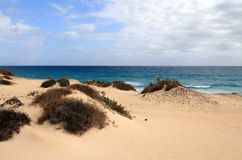 Corralejo natural park (Fuerteventura - Spain) Royalty Free Stock Images