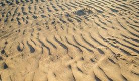 Corralejo sand och dyn arkivbilder