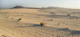 Corralejo sand och dyn på solnedgången royaltyfri fotografi