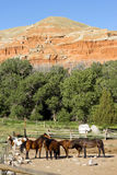 Corralled Horses Wyoming Badlands Ranch Livestock Animals Stock Image