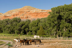 Corralled Horses Wyoming Badlands Ranch Livestock Animals Stock Photos