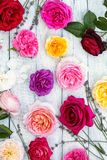 Correção das rosas em um branco fotografia de stock