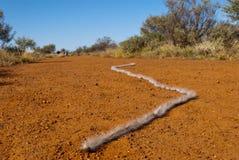 Correa eslabonada australiana del milpiés Fotografía de archivo