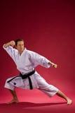 Correa negra del karate adulto Imagen de archivo libre de regalías