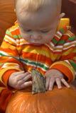 Correcção de programa da abóbora Foto de Stock Royalty Free