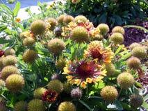 Correcção de programa de flores do jardim Foto de Stock Royalty Free