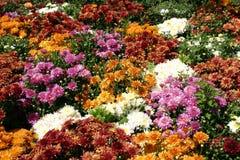 Remiendo de la flor Foto de archivo libre de regalías