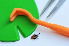 Correct and quick removal of a tick with a tick hook, tweezers or tick card Stock Photo