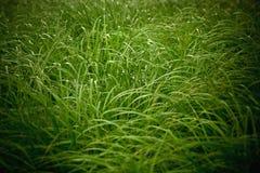 Correction d'herbe Photo libre de droits