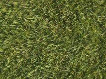 Correction d'herbe brute Photographie stock libre de droits