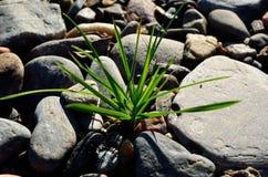 Correction d'herbe verte Photographie stock libre de droits