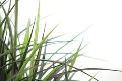 correction de 2 herbes Photos libres de droits