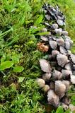 Correction de champignon photos stock