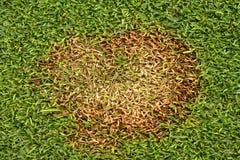 Correction Michrodochium Nivale de Fusarium. Image stock