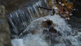 Corredeira bonita do rio do whitewater da montanha que corre através da floresta verde luxúria no outono ensolarado adiantado vídeos de arquivo