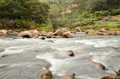 Corredeira do rio Imagem de Stock