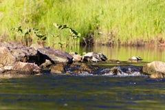 Corredeira no rio Foto de Stock Royalty Free