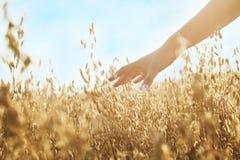 A corrediça da mão da mulher jogou as orelhas do trigo na luz do por do sol Imagens de Stock