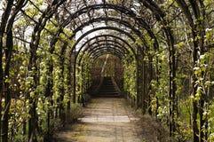 Corredor com a flor da maçã que conduz a uma escadaria Fotos de Stock Royalty Free