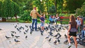 Corredor da menina após pombos Menina que joga com as pombas no parque da cidade vídeos de arquivo