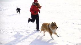Corredor da menina com os cães no campo de neve do inverno vídeos de arquivo