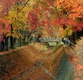 Corredor das folhas de bordo Imagem de Stock