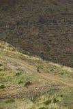 Corredor desconocido en la competencia de la bici de montaña Foto de archivo