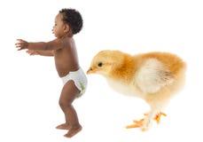 Corredor do bebê scared por uma galinha enorme fotos de stock royalty free