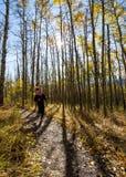 Corredor fêmea caucasiano novo através das árvores douradas do álamo tremedor em um dia bonito da queda Fotos de Stock Royalty Free