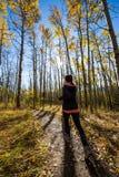 Corredor fêmea caucasiano novo através das árvores douradas do álamo tremedor em um dia bonito da queda Imagem de Stock