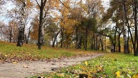 Corredor femenino que activa en parque en bosque del parque del otoño en colores de la caída almacen de metraje de vídeo