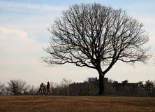 Corredores en el parque Foto de archivo libre de regalías