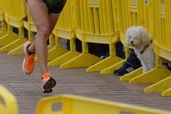 Corredores y perro imagen de archivo