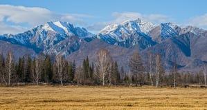 Correia da floresta do outono nos montes de Sayan Fotos de Stock Royalty Free